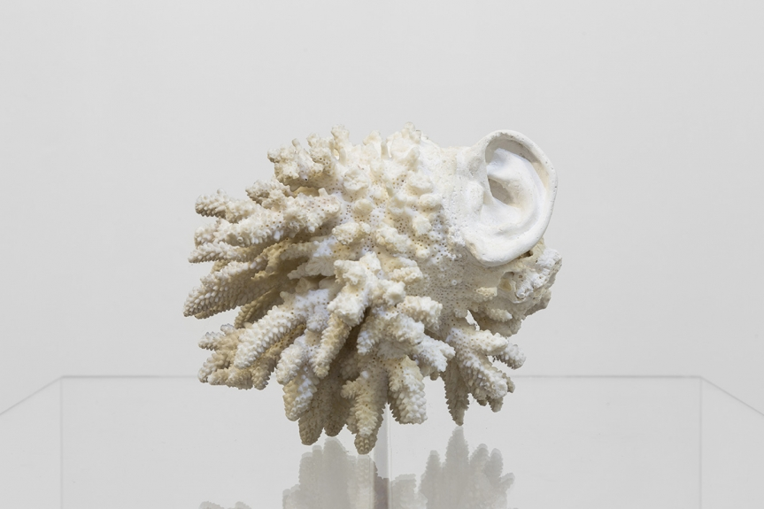Fauna, de André Romão. Ear-coral, 2019. Museu Coleção Berardo, Lisboa
